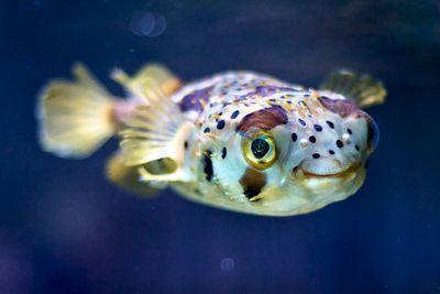 ماهی های شاد، زندگی سالم تری دارند ، هرچه شاد تر خوشمزه تر