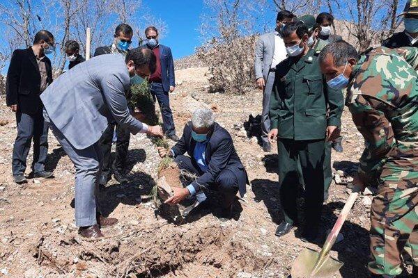 کاشت 200 اصله نهال بلوط در اراضی رفع تصرف شده معصوم آباد یاسوج