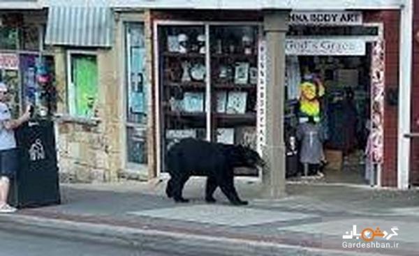 عکس، ورود خرس گرسنه به رستوران، مشتریان را شگفت زده کرد