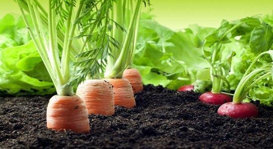 استفاده از عصاره های گیاهی برای جلوگیری از پوسیدگی محصولات کشاورزی